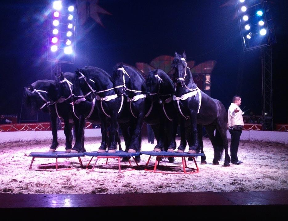 onfeledt szorakozas cirkusz friz lovak